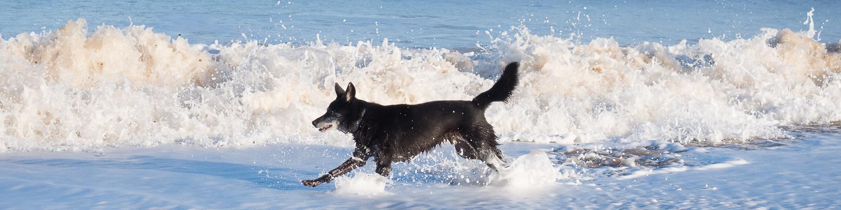 Rescue dog running free