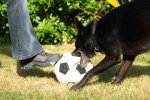Dog and ball 1107