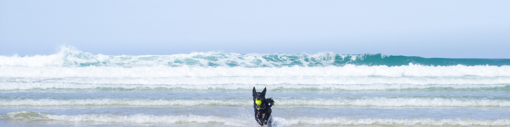 Dog playing in the Waves