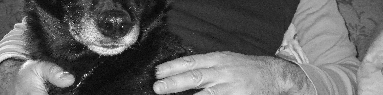 dog and human hand